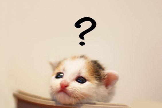 疑問を感じる子猫