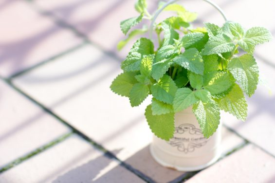 爽やかな植物