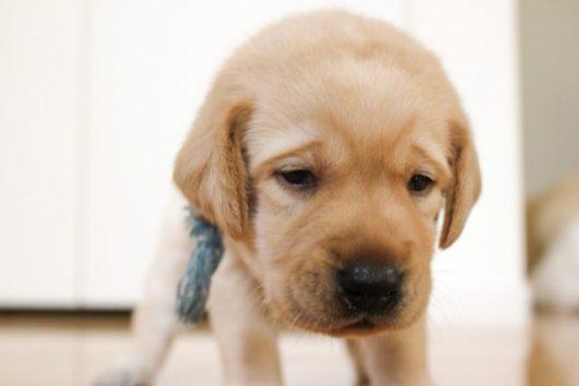 おしっこを我慢する子犬
