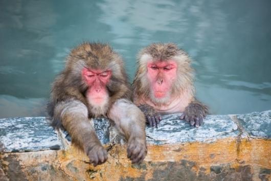 温泉に入るお猿さん