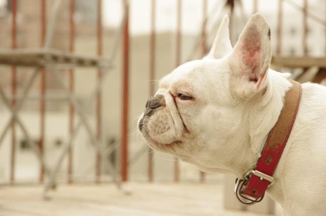 瞑想するイヌ
