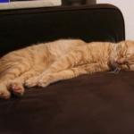 硬直して眠る猫